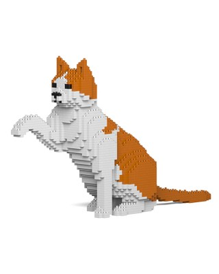 Orange & White Cat