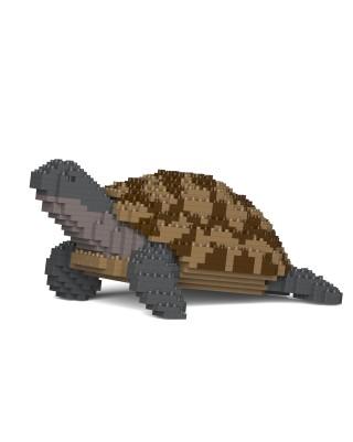 Turtle & Tortoise (6)