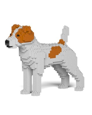 Jack Russell Terrier (6)