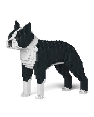 Boston Terrier (4)