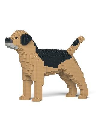 Border Terrier (2)