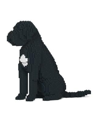 Cane Corso Dog (2)