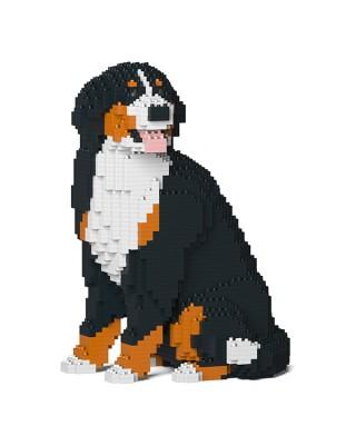 Bernese Mountain Dog  (5)