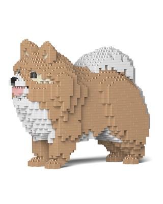 Pomeranian  (5)