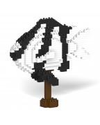 Banded Humbug  01C